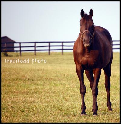 Horse_alone_2